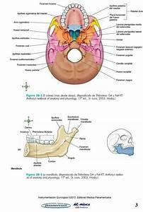 Pin Em Neurofisiologia