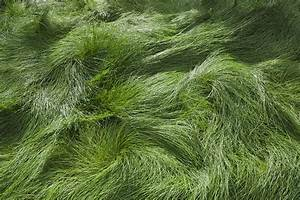 What Is the Best Grass for Shade?
