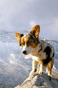 Mountain Climbing Dog