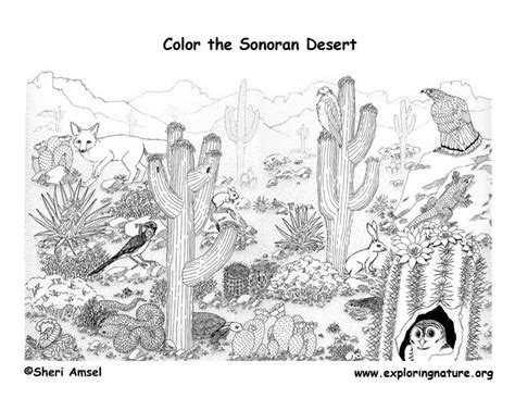 desert coloring pages    print