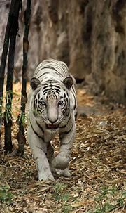 India's best photo | Wild cats, Animals beautiful, Animals ...