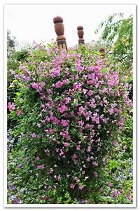 Plantsmans Guide To Clematis