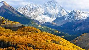 Beautiful, Places, In, California, Autumn, In, Colorado, Birch, Forest, With, Yellow, Leaves, Pine, Green