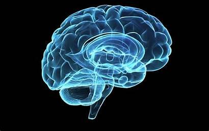 Neuroscience Background Galleryhip Hippest Desktop Backgrounds Hipwallpaper