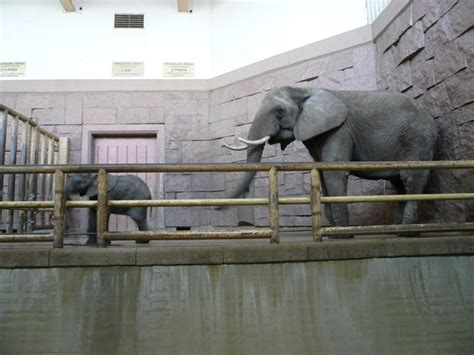 Zoologischer Garten Berlin Anfahrt by Tierpark In Berlin Lichtenberg Friedrichsfelde Ytti