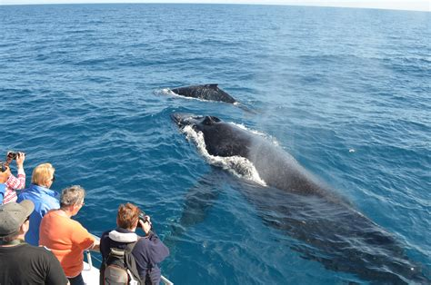 Whale Watching Season Is Around The Corner In Cabo San Lucas