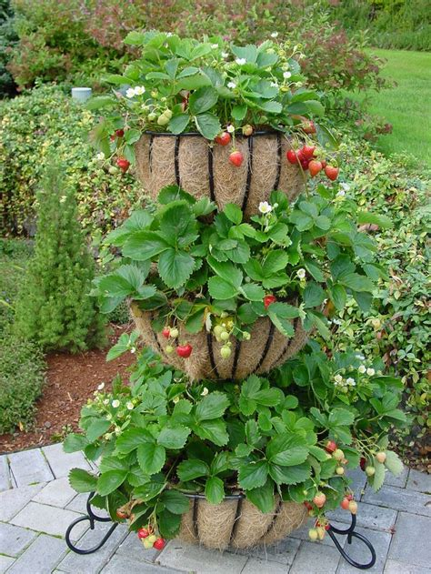 strawberry gardening strawberry planter ideas woodworking projects plans