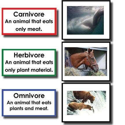 49 Best Images About Herbivore, Omnviore, Carnivore On Pinterest  Grocery Ads, Learning And Animals