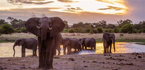 Botswana Safari: Your Guide to Discovering Botswana