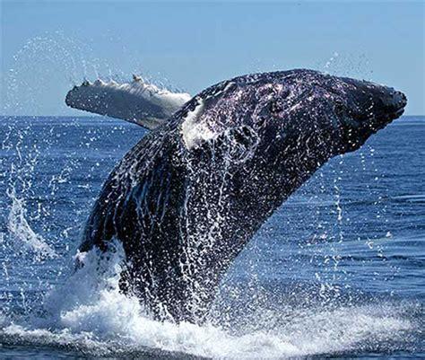 fotos de ballenas imagenes de ballenas