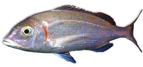 Leben Im Meer Fisch