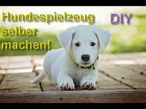 Hunde Intelligenzspielzeug Selber Machen : diy hundespielzeug selber machen bauen spielzeuge f r den hund basteln anleitung youtube ~ A.2002-acura-tl-radio.info Haus und Dekorationen