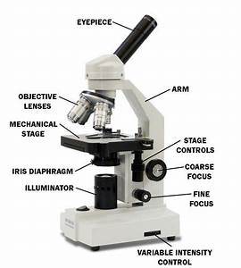 Labeled Microscope For Kids