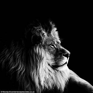 Dark Zoo pictures of animal in black and white