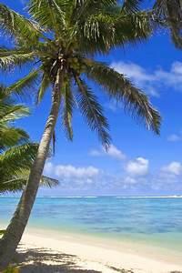 Bilder Von Palmen : michael defreitas palmen am strand poster online bestellen posterlounge ~ Frokenaadalensverden.com Haus und Dekorationen