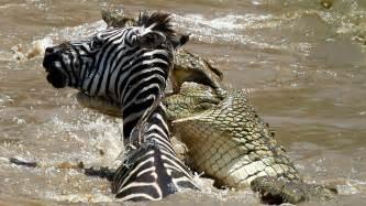 fauna del kenya kenya vacanze