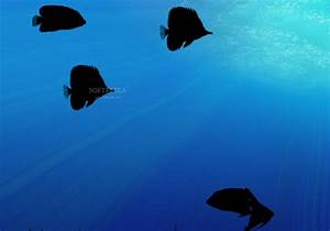 Aquarium Wallpaper Animated - WallpaperSafari