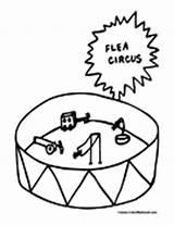 Flea Coloring Fleas Pages sketch template