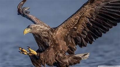 Hawk Standard