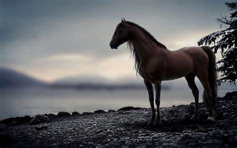 Hd Horse Wallpaper Free Download