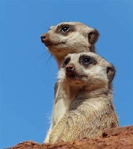 Bilder Gute Laune : hellwach ein gute laune foto foto bild natur spanien zoo bilder auf fotocommunity ~ Frokenaadalensverden.com Haus und Dekorationen