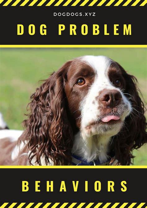 problem behaviors  images aggressive dog dogs