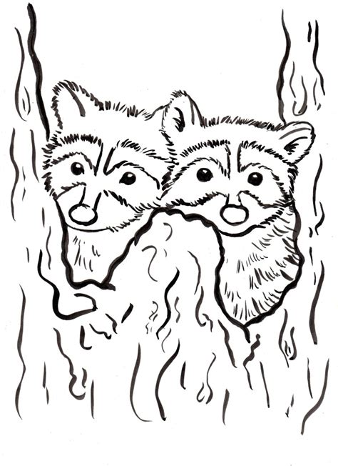 raccoon coloring page samantha bell