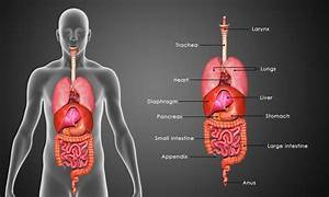 Stomach And Intestine Problems  Natural Medicines