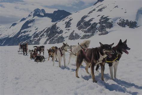 shore excursion spotlight dog sledding  alaska