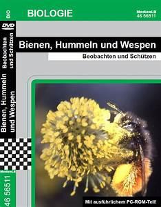 Bienen Und Wespen : bienen hummeln und wespen dvd medienlb ~ Whattoseeinmadrid.com Haus und Dekorationen