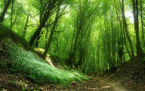 green forest plants path sunny wallpapers green forest