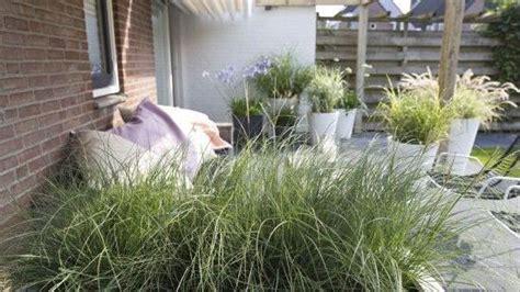 gräser für balkon gmh f 252 r jeden geschmack ist ein gras gewachsen gabot de