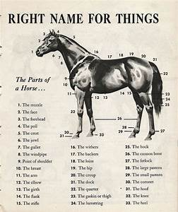 Top 25 Ideas About Points Of The Horse On Pinterest