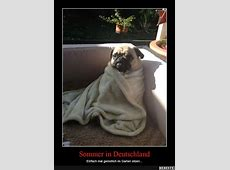 Sommer in Deutschland Lustige Bilder, Sprüche, Witze
