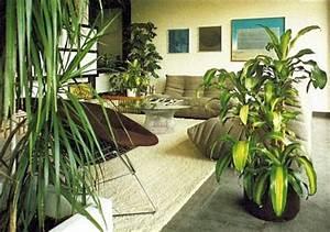 Pflanzen Für Wohnzimmer : zimmer und gartenblumen ~ Markanthonyermac.com Haus und Dekorationen