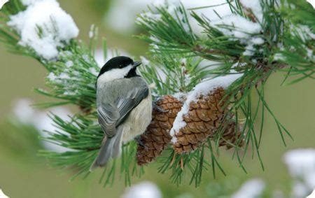 winter wild birds unlimited wild birds unlimited