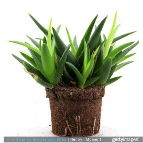 plante dans la chambre des plantes dans la chambre une bonne idée enfant