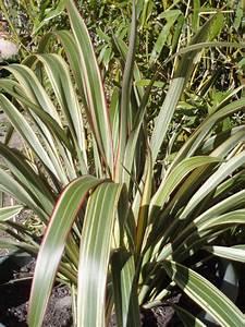 Arbuste Persistant En Pot : d co arbuste persistant en pot clermont ferrand 6768 ~ Premium-room.com Idées de Décoration