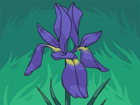 easy ways  draw  flower wikihow