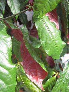 Pflanze Mit Fleischigen Blättern : bild ~ Buech-reservation.com Haus und Dekorationen