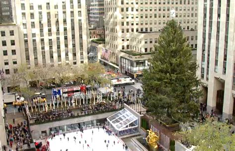 best 28 what to feed a live christmas tree best 3d
