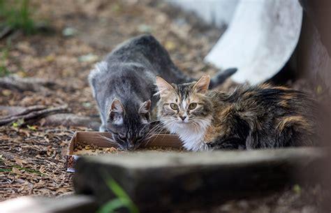 stray cat trap tnr for stray cats best friends animal society
