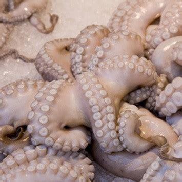 cuisiner les calamars calamars ingrédient cuisine ta mère