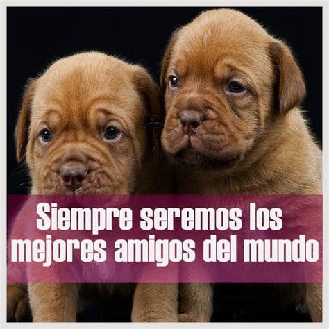 imagenes de perritos  frases cortas bonitas