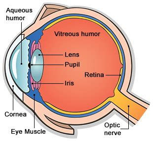 Parts Eye Diagram