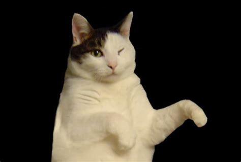 Dancing Cat Meme - kitty cat dance know your meme