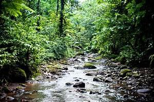 Costa Rica Zip Line Adventure Tours for Weddings - VISTA ...