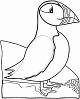 Puffin Coloring Pages Bird Puffins Printable Atlantic Crafts Birds Realistic Sheets Patterns Newfoundland Super Template Cartoon Animals Pattern Embroidery Glass sketch template