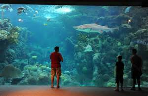 Florida Aquarium's major expansion officially is under way ...