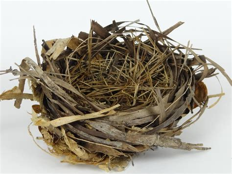 Nest Syndrom by Empty Nest And What To Do About It Age With